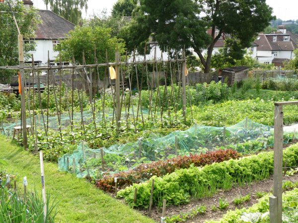 Hull: Allotment groups beware!