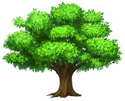 Community Trees Fund to Open Soon