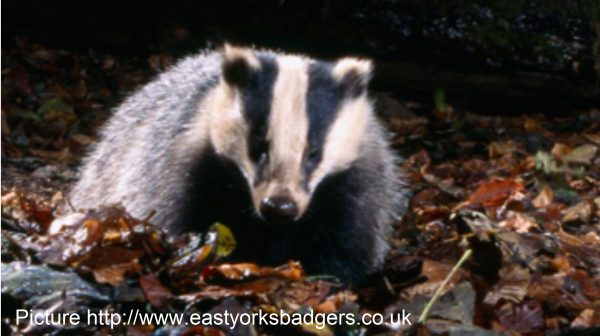 Humberside Police: Operation Badger