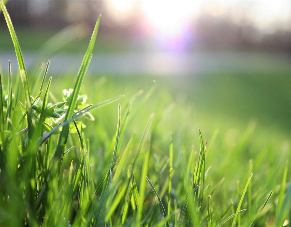 gardening grass
